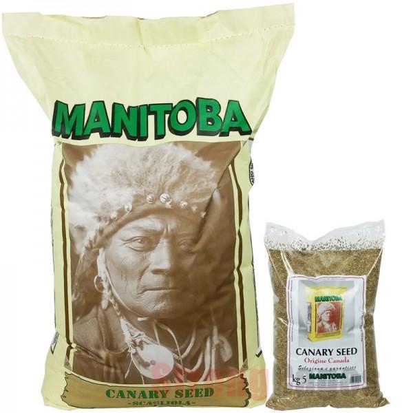 Alpiste Canada Extra Manitoba