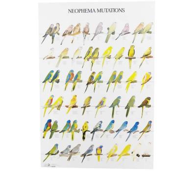 Neophema Mutations