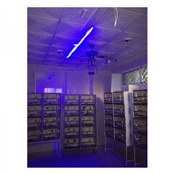 220V LED STRIP BLUE LIGHT EFFECT MOON NIGHT WITH CONNECTION